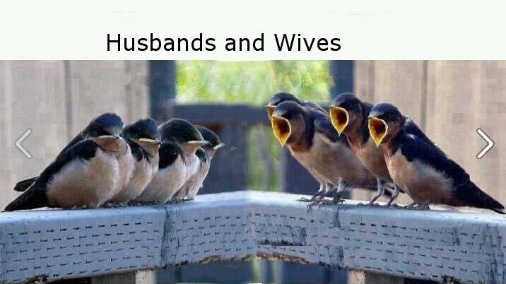 Husband vs wife